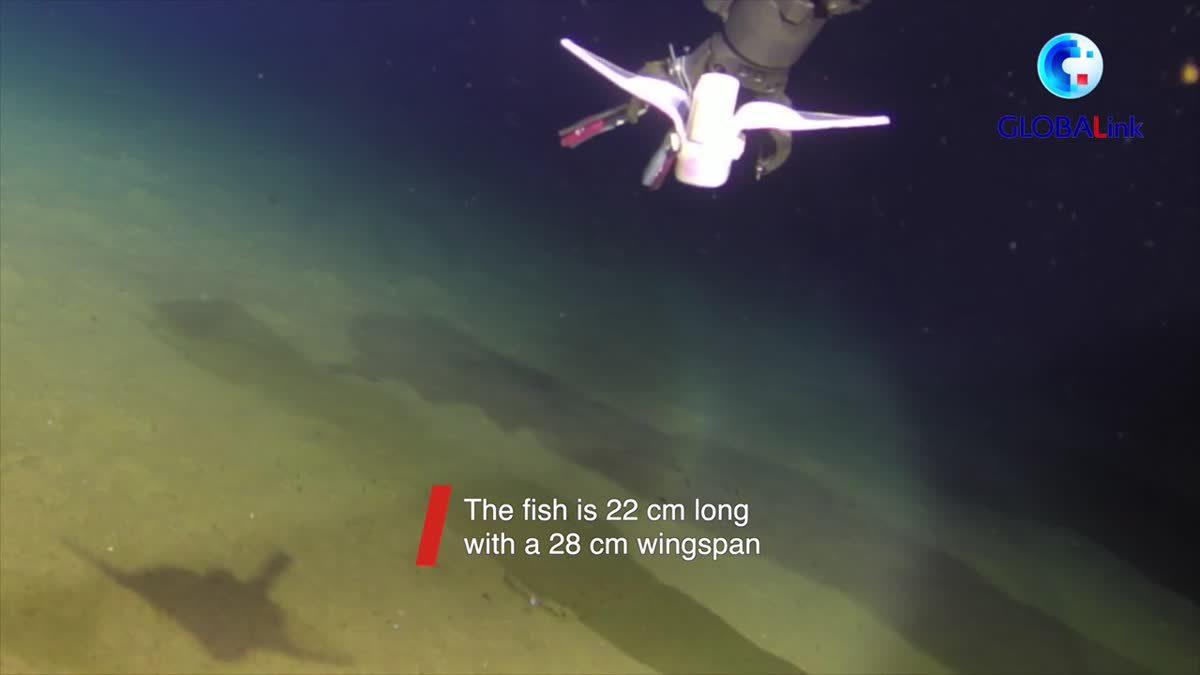 'หุ่นยนต์ปลา' ของจีนลงว่ายน้ำในร่องลึกก้นสมุทร 10,000 ม.