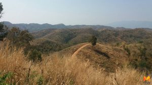 ปฏิบัติการพิทักษ์ป่า บุกทวงคืนผืนป่าลุ่มน้ำป่าสักกว่า 3 พันไร่