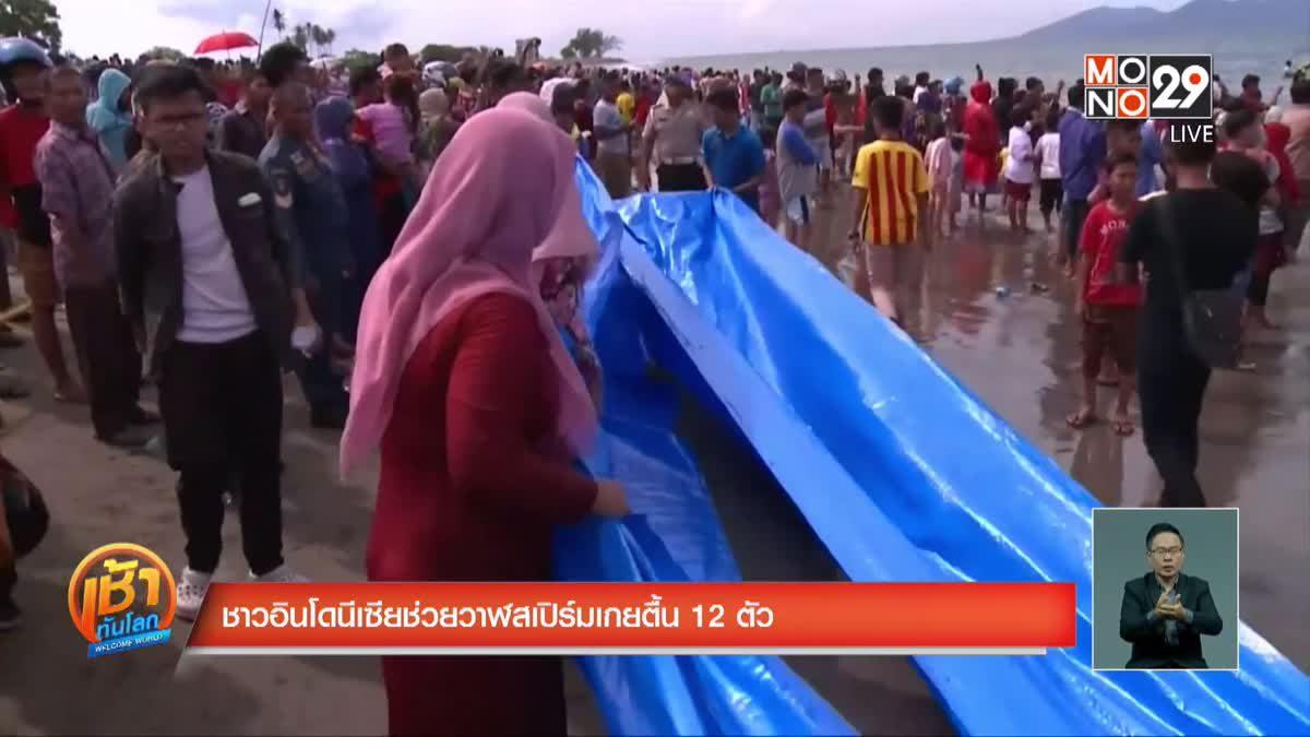 ชาวอินโดนีเซียช่วยวาฬสเปิร์มเกยตื้น 12 ตัว