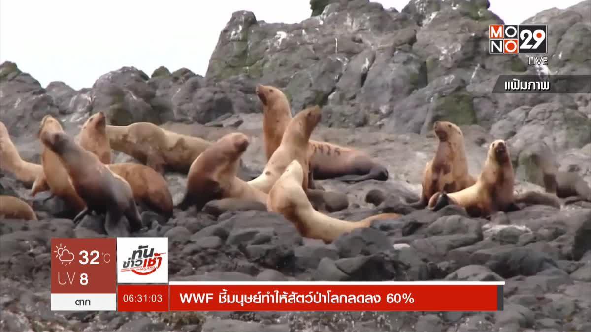 WWF ชี้มนุษย์ทำให้สัตว์ป่าโลกลดลง 60%