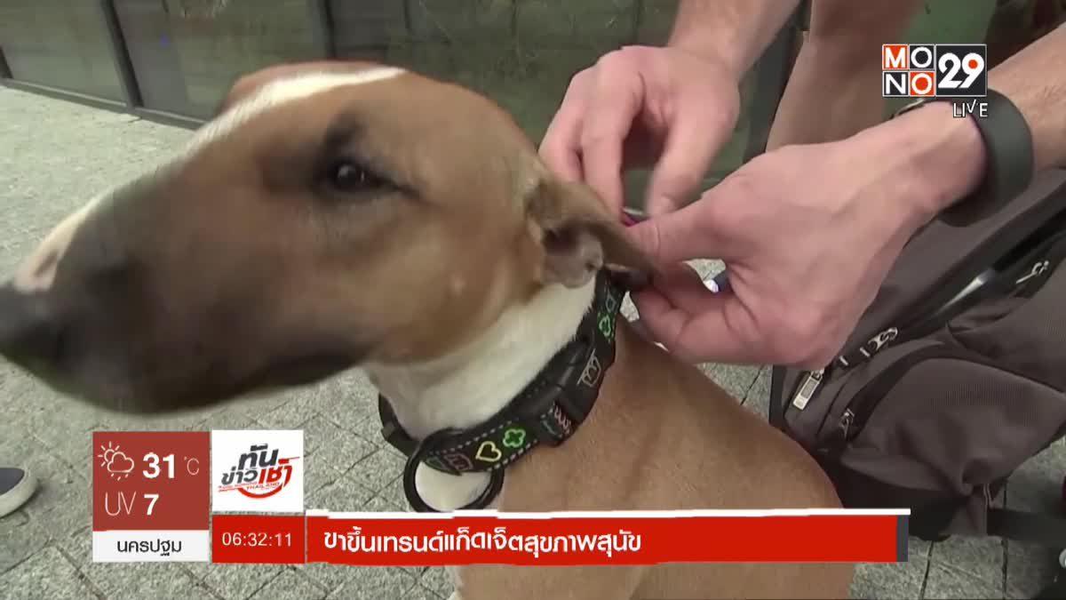 ขาขึ้นเทรนด์แก็ดเจ็ตสุขภาพสุนัข