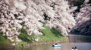 [รีวิว] รวมพิกัด จุดชมซากุระบาน ที่ญี่ปุ่น ไปแล้วต้องแวะ แชะภาพสวยๆ