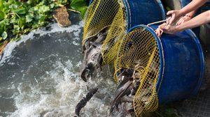 คาถาปล่อยปลา ปล่อยเต่า หรือสัตว์น้ำ