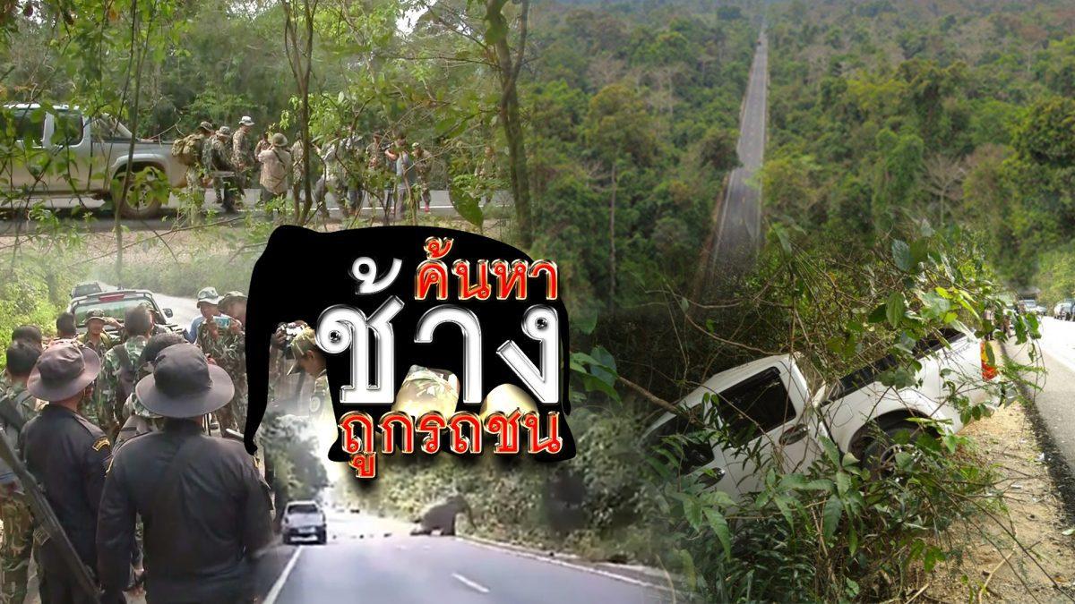 ค้นหาช้างถูกรถชน