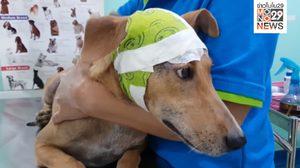 พบสุนัข 2 ตัวถูกทำร้ายเจ็บสาหัส ชาวบ้านระดมเงินช่วยเหลือ