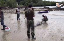 พบโลมาลายแถบลอยตายในทะเล จ.กระบี่