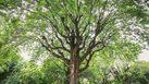 """กระทรวงพาณิชย์ แนะ เกษตรกรใช้ """"ไม้ยืนต้น"""" ค้ำประกันขอสินเชื่อได้"""