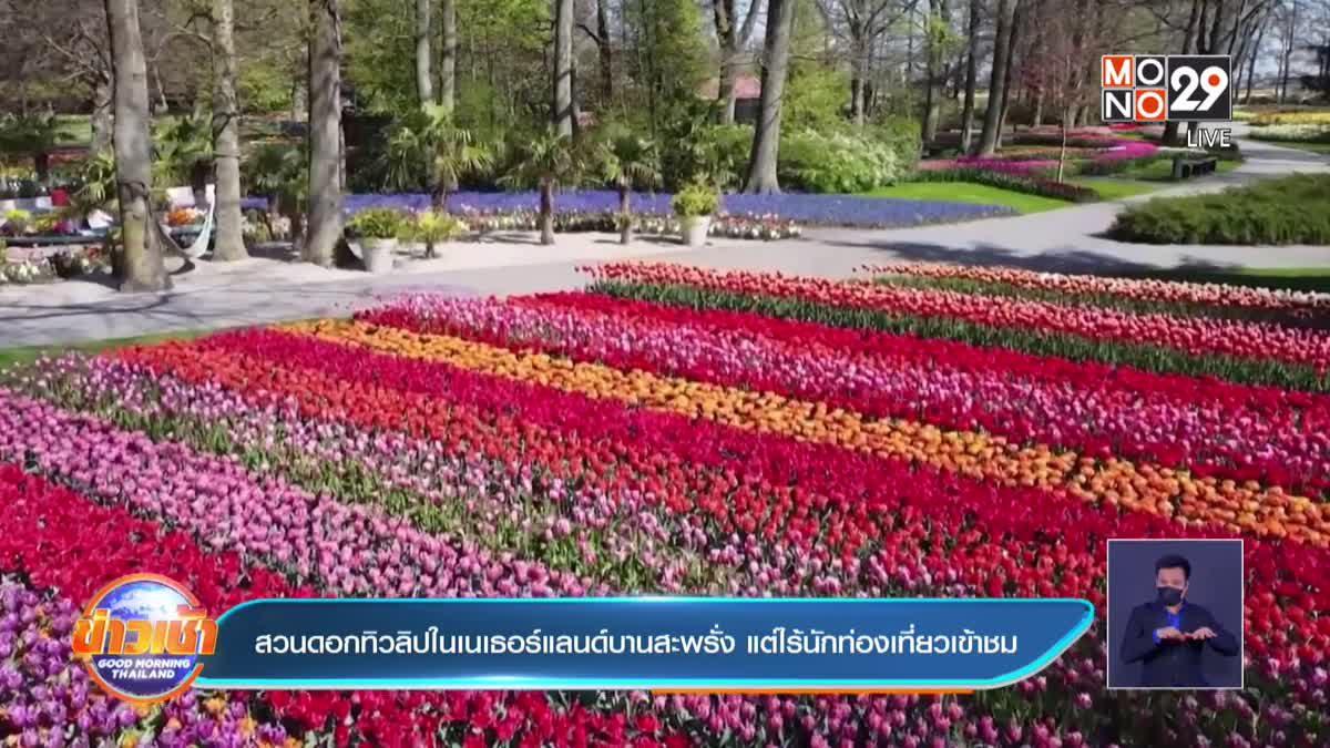 สวนดอกทิวลิปในเนเธอร์แลนด์บานสะพรั่ง แต่ไร้นักท่องเที่ยวเข้าชม