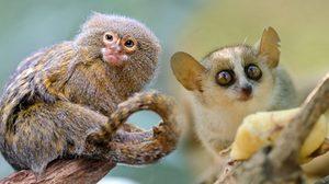 9 สัตว์ตัวจิ๋ว จากทั่วโลก