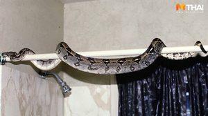 วิธีป้องกัน งูเข้าแอร์ งูโผล่จากชักโครกต้องรู้ที่มางูเข้าบ้านได้ยังไง