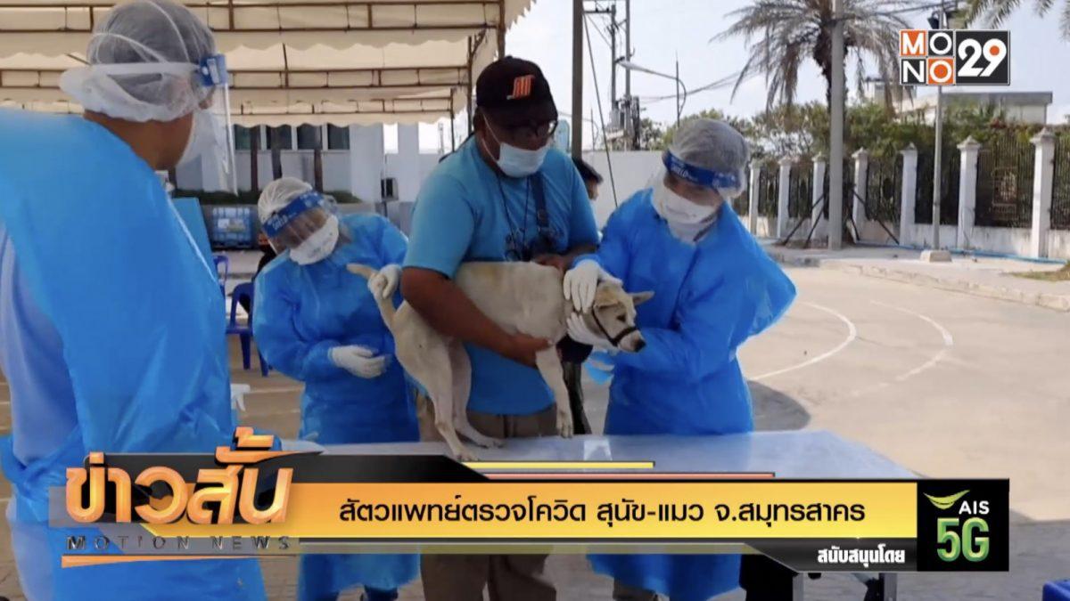 สัตวแพทย์ตรวจโควิด สุนัข-แมว จ.สมุทรสาคร