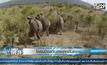โดรนป้องกันช้างจากอันตราย