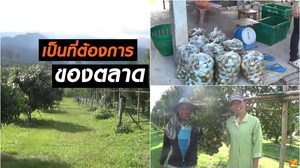 เกษตรกร! ปลูกส้มออร์แกนิคขาย รายได้ต่อเดือนกว่า 5-6 หมื่นบาท