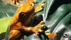 9 Species found Only In Thailand
