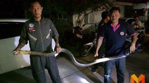 พบ 'งูจงอาง' ยาว 4 เมตร นอนขดอยู่ตรงสายไฟหอพักหน้า ม.พะเยา