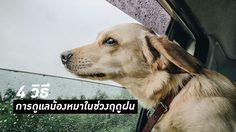 5 โรคร้ายในสัตว์เลี้ยงช่วงหน้าฝน - 4 วิธี การดูแลสุนัขในช่วงฤดูฝน