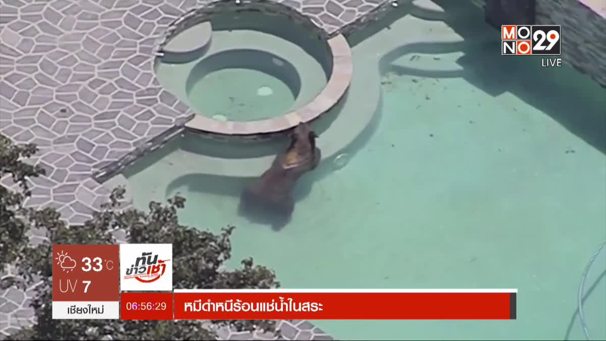 หมีดำหนีร้อนแช่น้ำในสระ