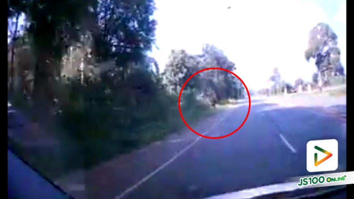อุบัติเหตุม้าตัดหน้ารถคันเจ้าของคลิป ชนเลยเต็มๆ (10-10-61)