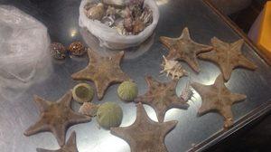สุดยอด ! สาวไทยฉะแหลก ขอปลาดาวคืนธรรมชาติ จากมือนักท่องเที่ยวจีน