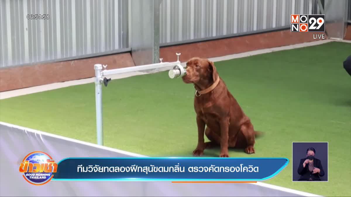 ทีมวิจัยทดลองฝึกสุนัขดมกลิ่น ตรวจคัดกรองโควิด