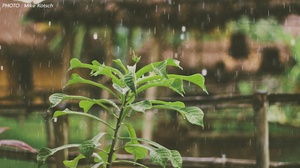 พยากรณ์อากาศ 4 ม.ค. 2563 – เหนือ มีฝนฟ้าคะนอง ลมกระโชกแรง / อ่าวไทยคลื่นลมแรง