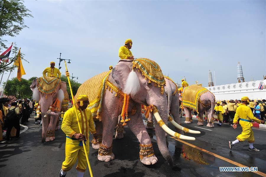 ชมอีกครั้ง ขบวนช้างเทิดพระเกียรติในพระราชพิธีบรมราชาภิเษก งดงามมาก!
