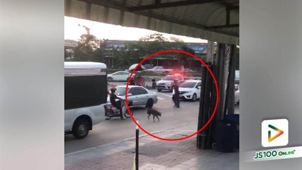 คลิปคุณตำรวจน่ารักโบกรถให้หน้องหมาข้ามถนน (16-05-61)