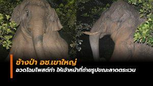 ช้างป่า อช.เขาใหญ่ อวดโฉมโพสต์ท่า ให้เจ้าหน้าที่ถ่ายรูปขณะลาดตระเวน