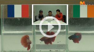 ซี้ซั้วฟันธง! ปลากัดทายผล ยูโร 2016 ฝรั่งเศส ปะทะ ไอร์แลนด์ (26 มิ.ย.)