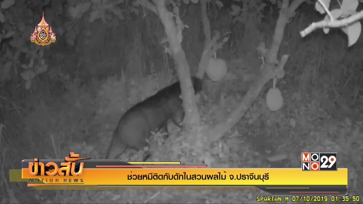 ช่วยหมีติดกับดักในสวนผลไม้จ.ปราจีนบุรี