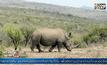 แอฟริกาใต้ใช้โดรนจัดการนักล่าสัตว์
