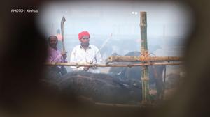 บูชายัญสัตว์ 8,000 ตัวในวันเดียวในเทศกาลคฒิมาอี
