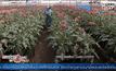 ผู้ค้าดอกไม้โคลอมเบียเตรียมรับวาเลนไทน์
