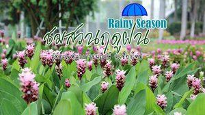 เที่ยวหน้าฝน กางร่มชมสวน ณ อุทยานหลวงราชพฤกษ์