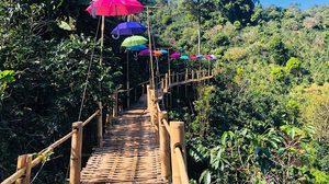 สะพานไม้ไผ่ไร่ผาฮี้ จ.เชียงราย เดินย่ำสกายวอร์คดูวิว ฟินไปกับธรรมชาติรอบตัว