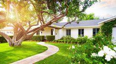 ต้นไม้ปลูกในบ้าน ให้ร่มเงา สร้างบรรยากาศให้บ้านดูสดชื่นและร่มรื่น