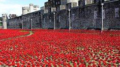 ดอกป๊อปปี้เซรามิกนับแสน ไหลลงจากหอคอย รำลึกถึงทหารอังกฤษ