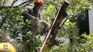 [Exclusive] 'รุกขกร' นักตัดแต่งต้นไม้ใหญ่ อาชีพใหม่น่าสน ตลาดต้องการเพียบ