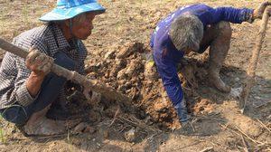 ชาวบ้านเมืองช้าง ขุดดินจับปลาไหล สร้างรายได้วันละ 400-500 บาท