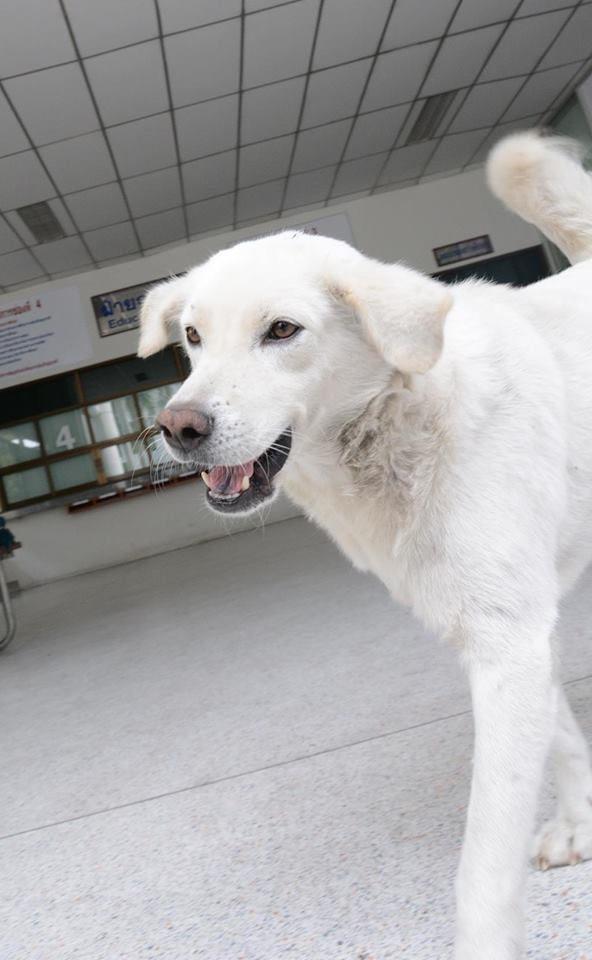 KU SRC DOG Lovers (2)