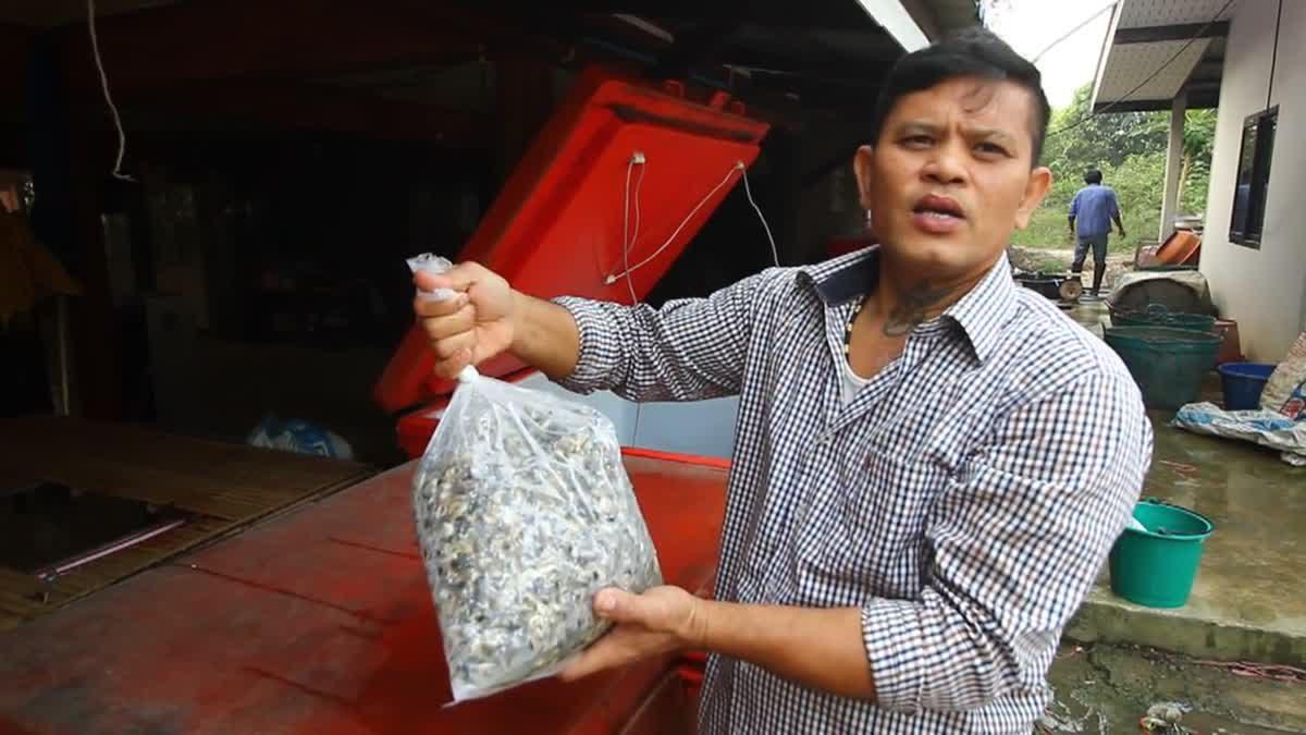 เพาะเลี้ยง 'หอยขม' นำมาแปรรูปส่งร้านอาหาร สร้างรายได้หลักแสน